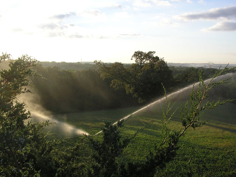 Irrigated Food Plots